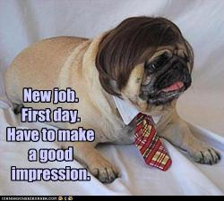 first day at work pug