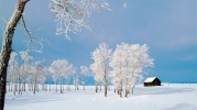 cabin_the_tundra_trees_winter_nature_hd-wallpaper-1244837