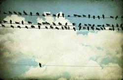 conforming-quotes-1