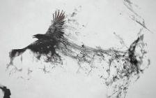 crow sketch pcwallart