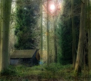 shack in woods