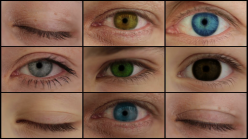 nine-different-colored-eyes-videoblocks-lionaroundwriting